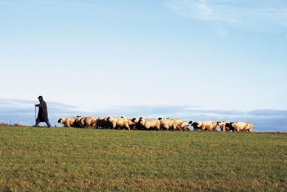 Advent im Schafstall - Wanderung mit Schäfer und Schafen