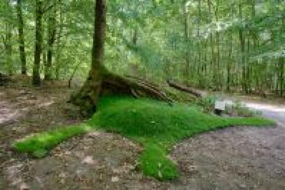 Waldkunst im Bessunger Forst