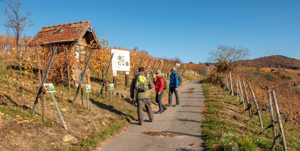 Kulinarische Herbstwanderung auf dem Geopark-Erlebnispfad Wein und Stein