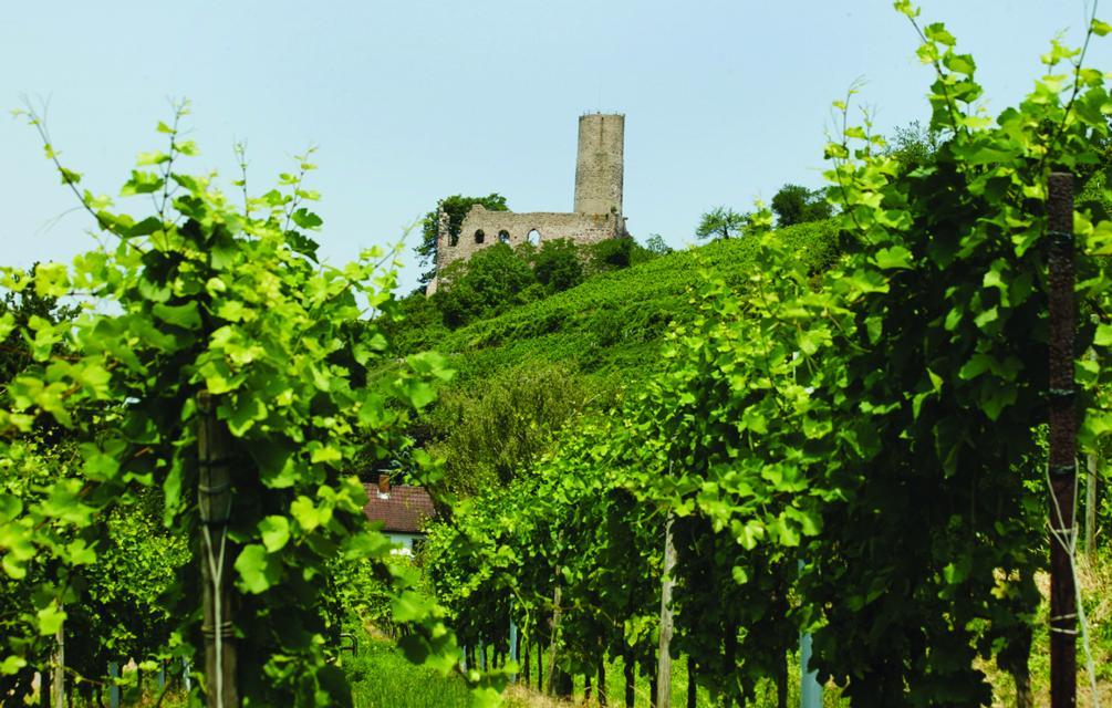 Weinwanderung Schriesheim
