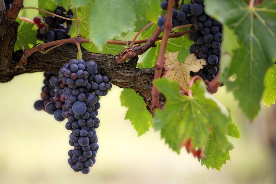 Wein- und Blütenfest