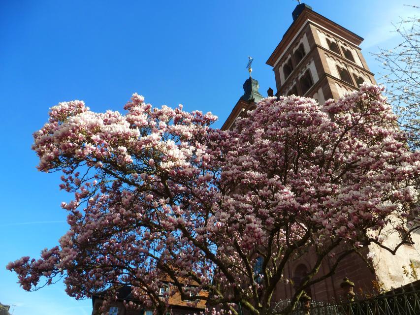 Kastanienblütenfest