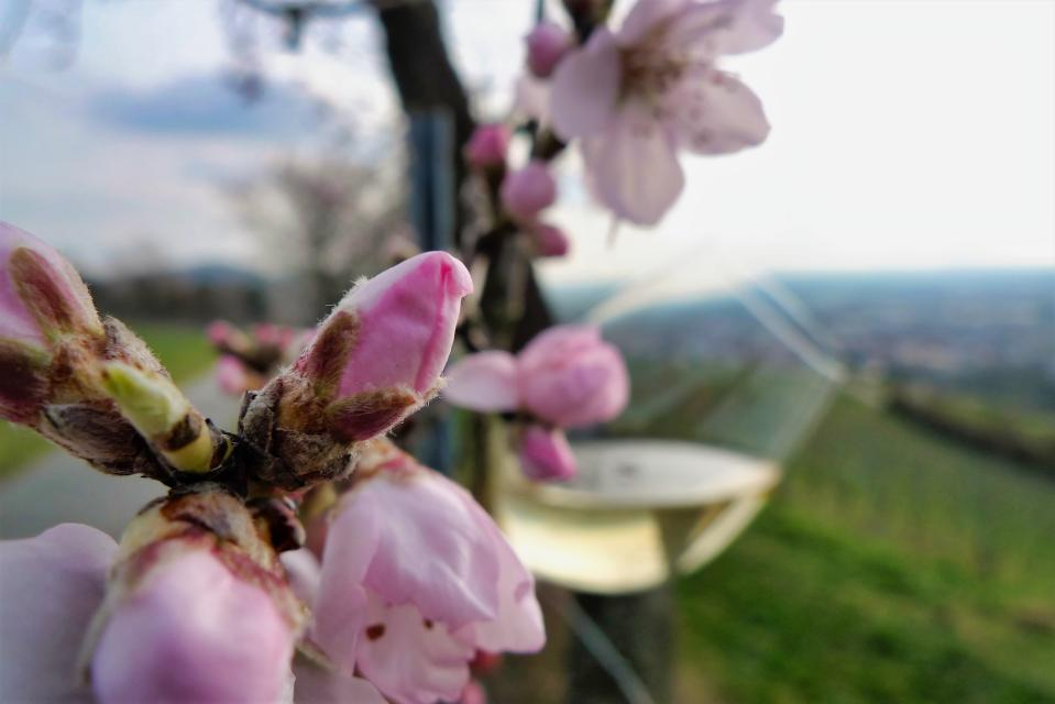 Bergsträßer Weinfrühling