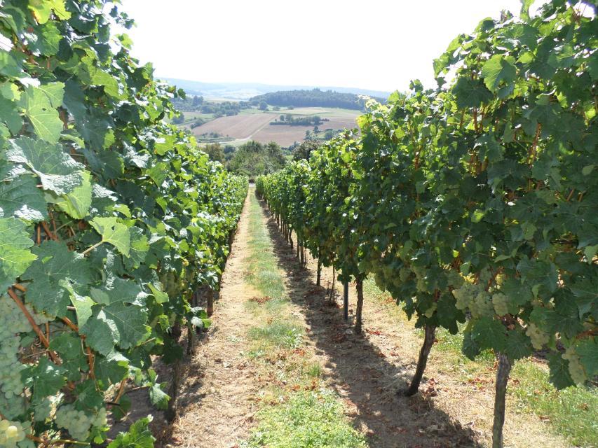 Weinlagenwanderung - Odenwälder Weininsel
