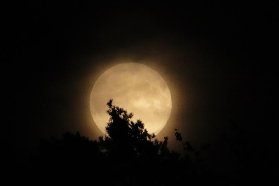 Auf leisen Sohlen unterwegs bei Mondschein – eine sinnliche Nachtwanderung