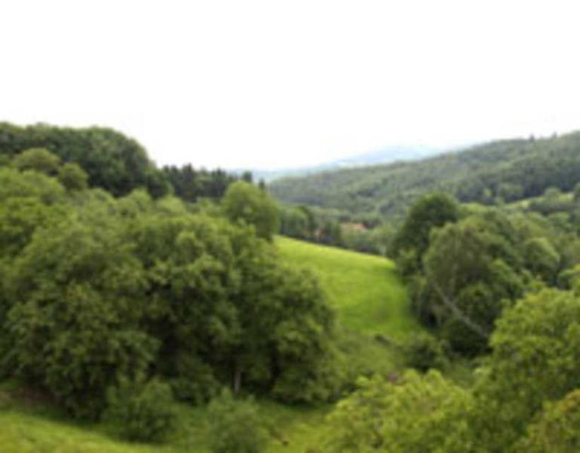 Gasthof Grüner Baum Mackenheim