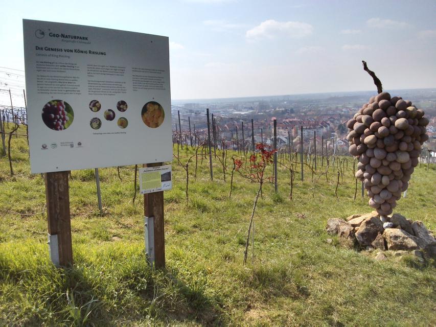"""Auf dem Erlebnispfad """"Wein & Stein"""" wandern"""