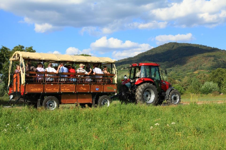 Zwingenberg – Fahrten mit dem Planwagen