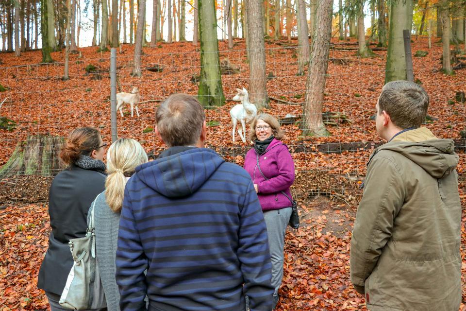 Ein Ausflug zum Wildpark Brudergrund Erbach