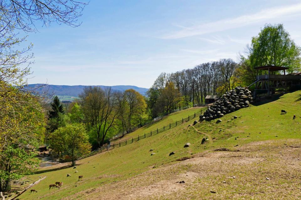 Ein Besuch im Bergtierpark Erlenbach bei Fürth