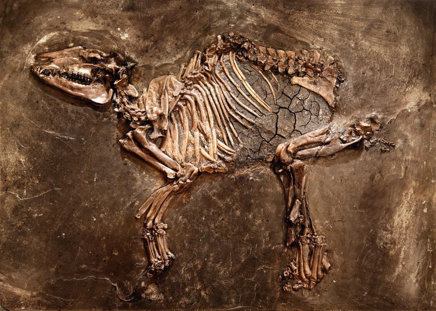 Fossilien- und Heimatmuseum Messel