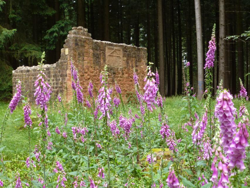 """Odenwald-Limes: Römischer Wachturm """"In den Vogelbaumhecken"""""""