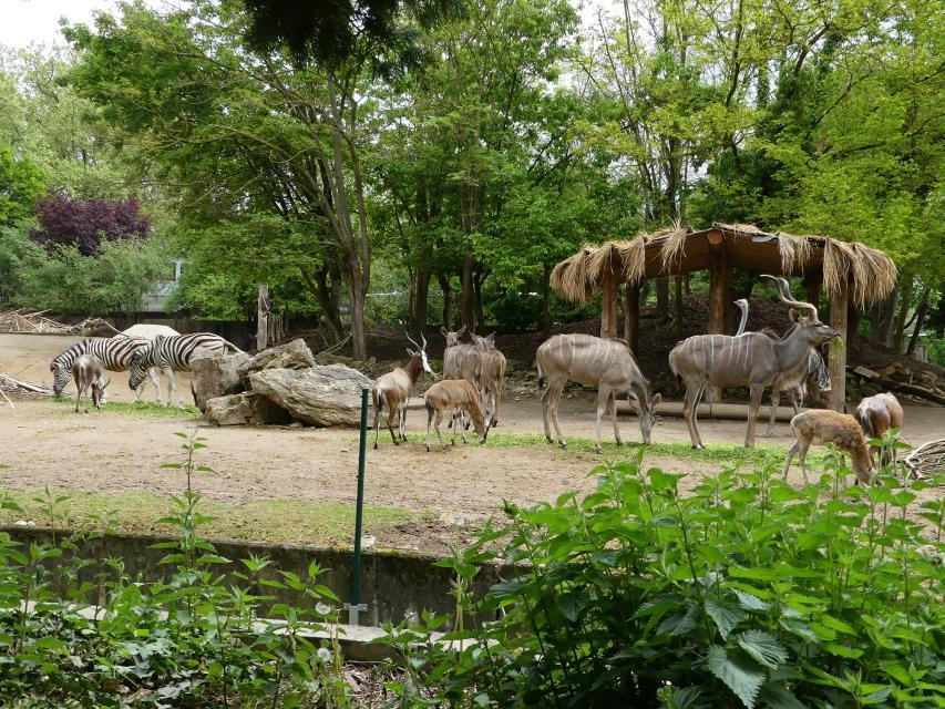 Petra Medan - Heidelberger Zoo