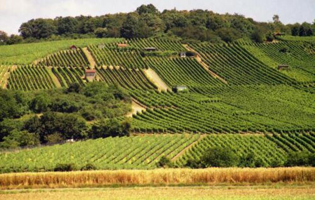 Weinlehrpfad Herrnberg