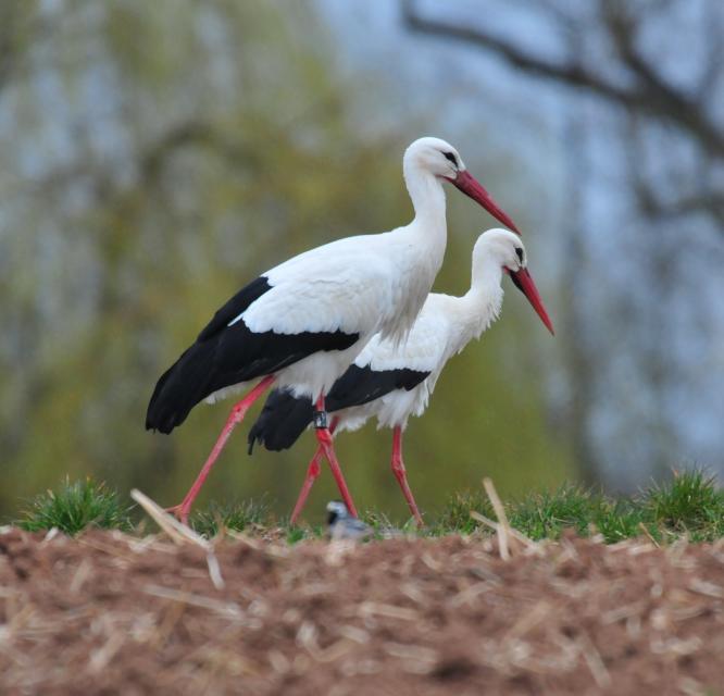 Storchenweg - Wandern auf der Spur von Storch und Natur