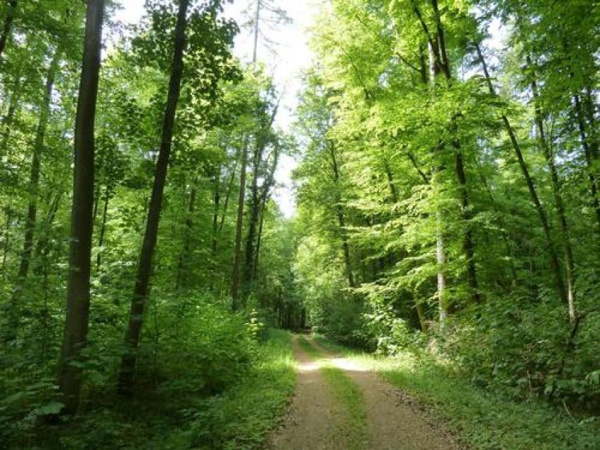 Radrunde Grube Messel - Dieburg - Vom Welterbe durchs Hügelland