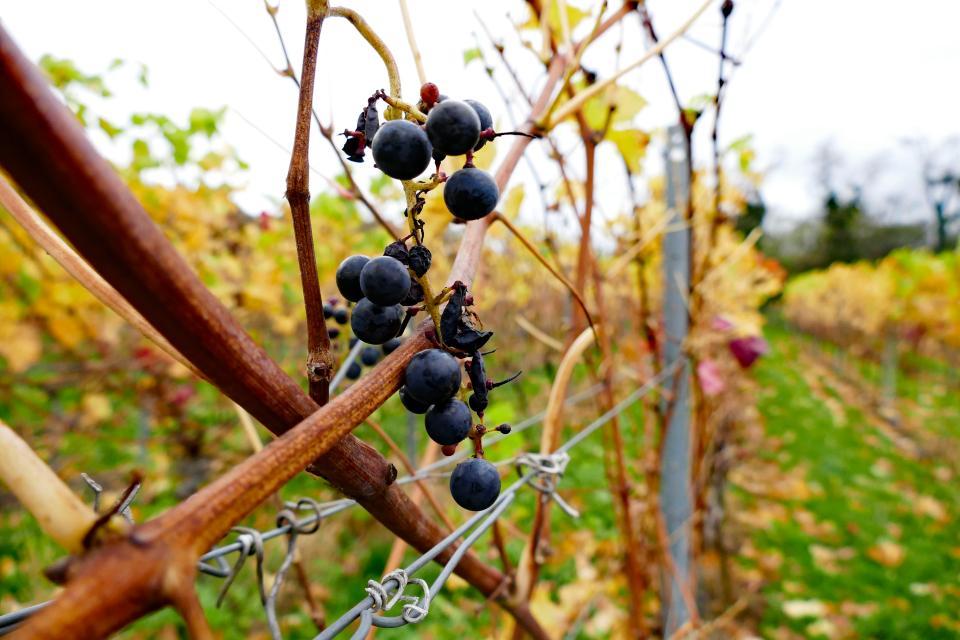 Odenwälder Weininsel Wanderweg