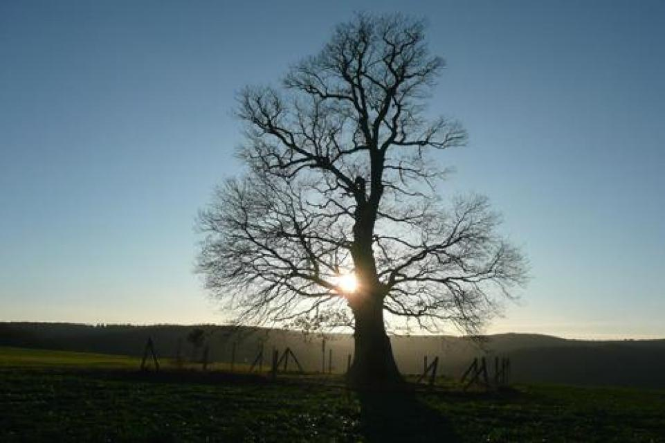 Meditationsweg - Sonnengesang des Heiligen Franziskus