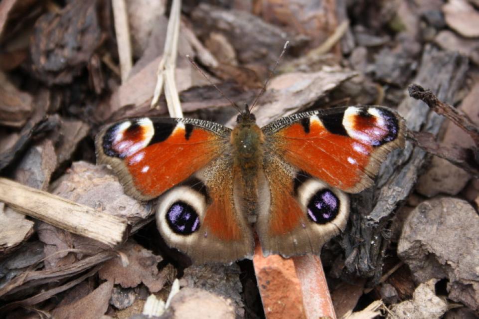 Das Paradies für Schmetterlinge: Hortus Insectorum