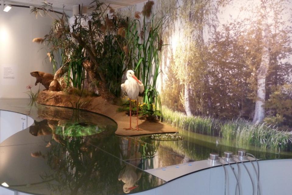 Fluvius - Fluss und Teich Museum Wasssertrüdingen
