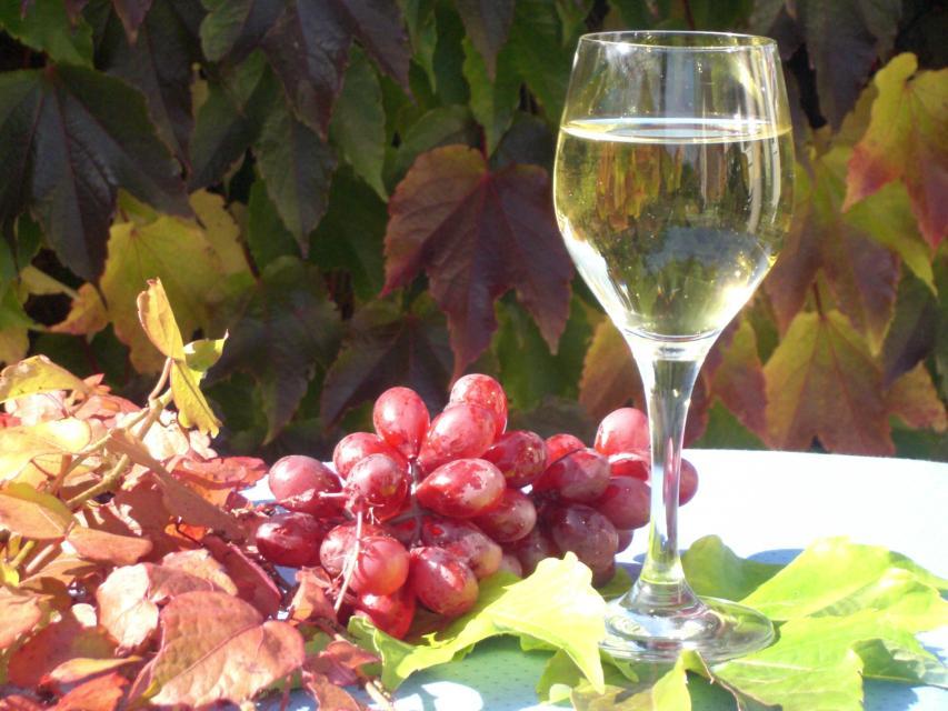 Ferienbauernhof und Weinbau Ott