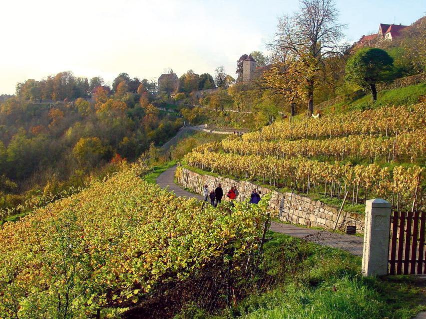 Weinlehrpfad Stein und Wein in Rothenburg o.d.T