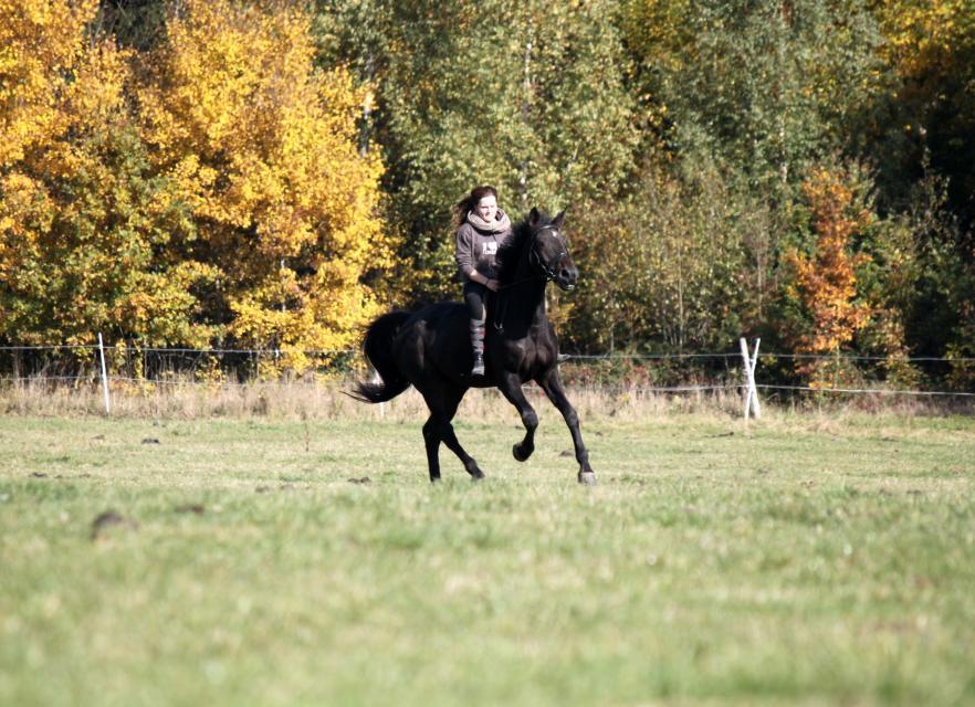 Pferdefreunde Gerolfingen