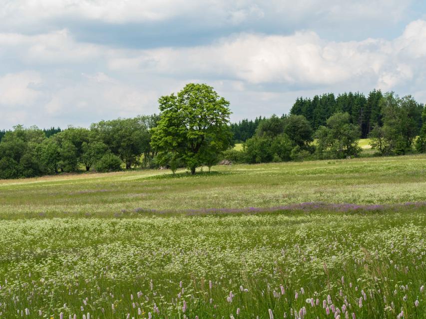 Wildkräuterspaziergang: Essbare Blüten und Kräuter