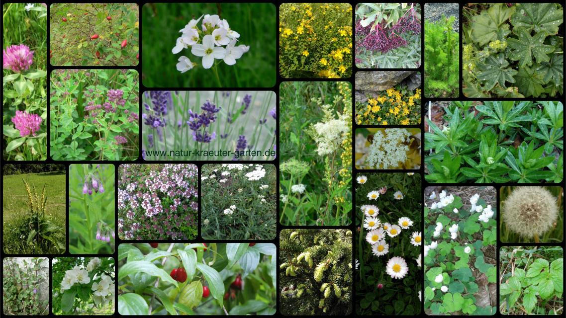 Wildkräuterspaziergang: Sommerkräuter und essbare Blüten