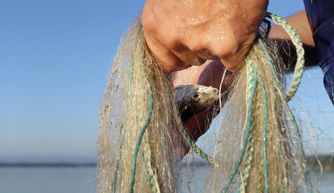 Fischführung am Vormittag