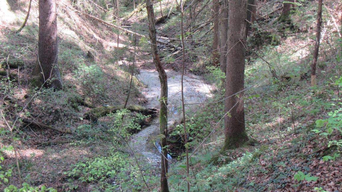 Bachlauf in der Waldschmidtschlucht
