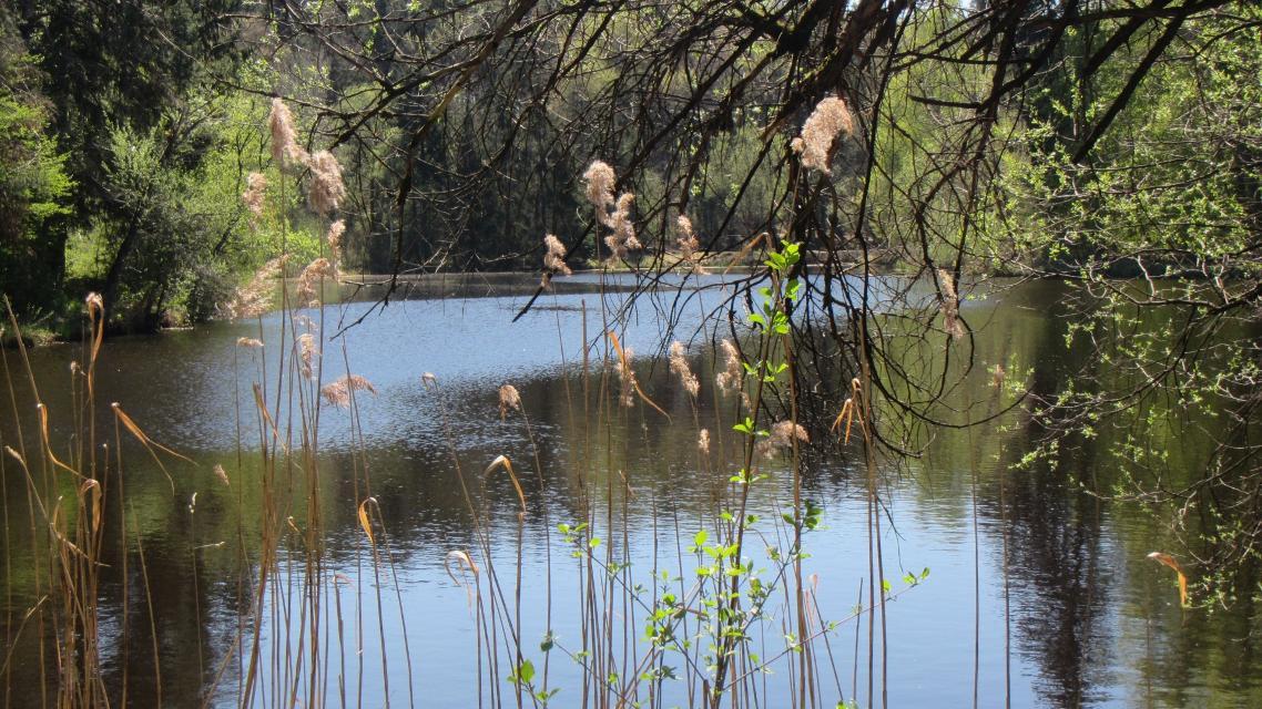 Vogelweiher - Cermakweiher