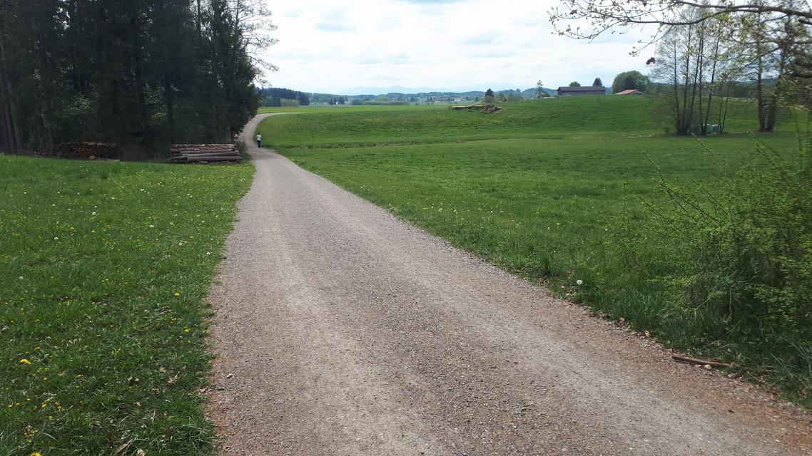 Waldweg zurück nach Aschering