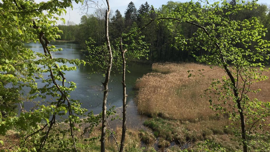 Blick auf Dorfweiher von Widdersberg