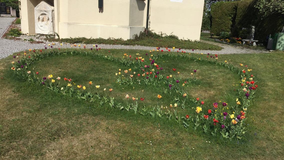 Tulpenherz von St. Michael