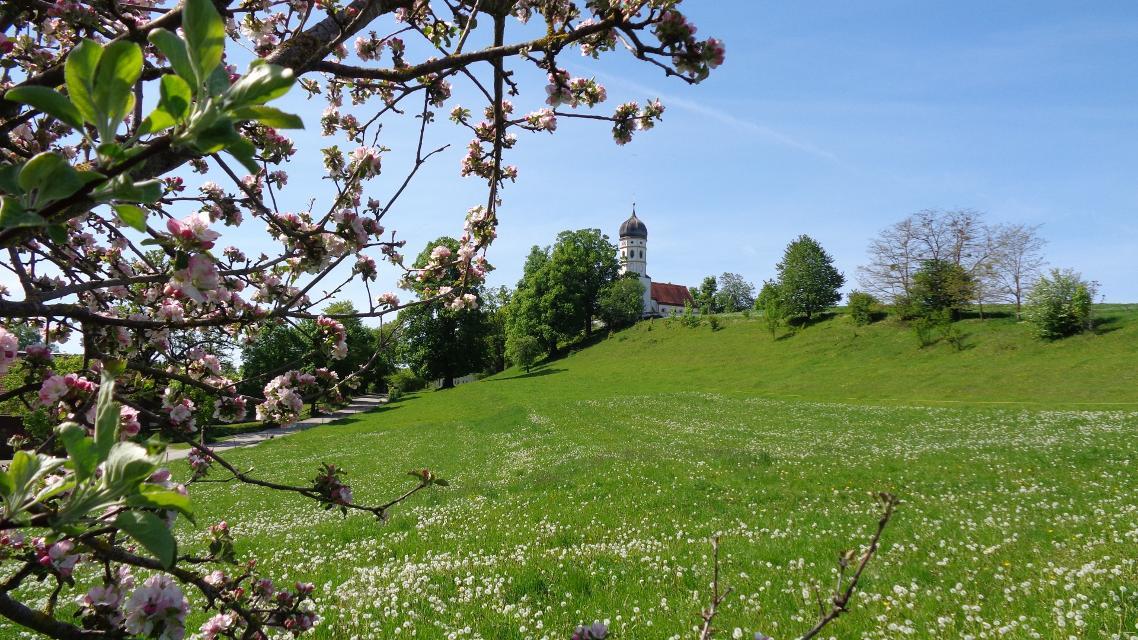 Apfelbaum bei Holzhausen