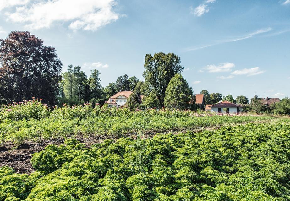 Viele Zutaten für die Gerichte holt sich der Küchenchef zum Teil vom eigenen Gemüsefeld direkt am Schlossgut