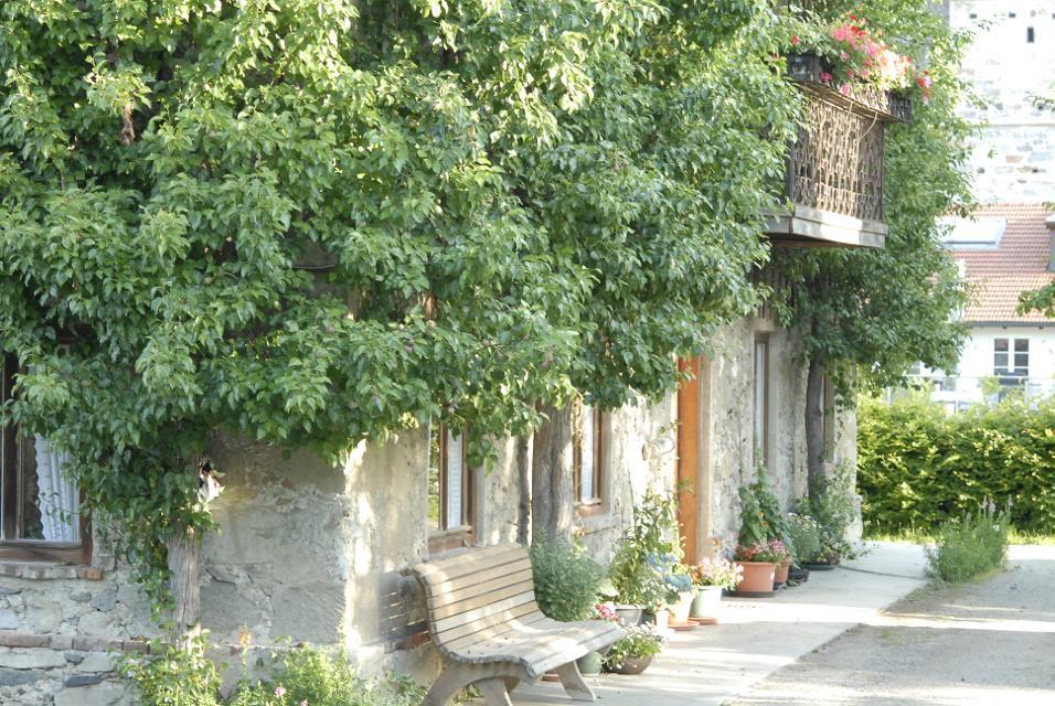 Fassadenbegrünung mit Obstspalieren am Obst- und Kulturweg Ratzinger Höhe